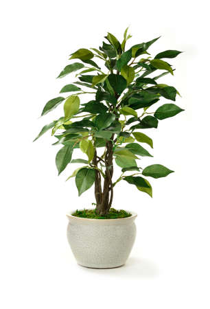 Studio image of a miniature artificial tree in a pot  Concept image for interior design or office furniture use against a white background  Copy space