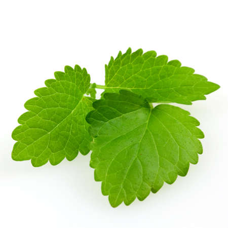 lemon balm isolated on white