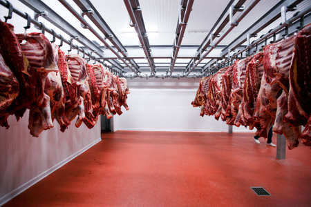 Foto de Image of a half beef chunks fresh hung and arranged in a row in a large fridge in the fridge meat industry. - Imagen libre de derechos