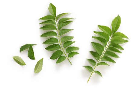 Foto de curry leafs - Imagen libre de derechos