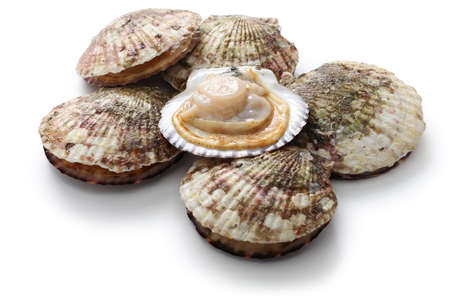Photo pour raw scallops, shell opened, close up - image libre de droit