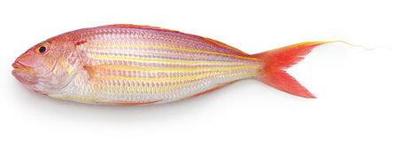 Photo pour golden threadfin bream isolated on white background - image libre de droit