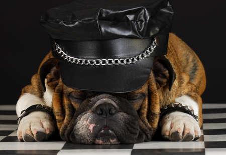 english bulldog wearing black leather dressed up like motorcycle gang
