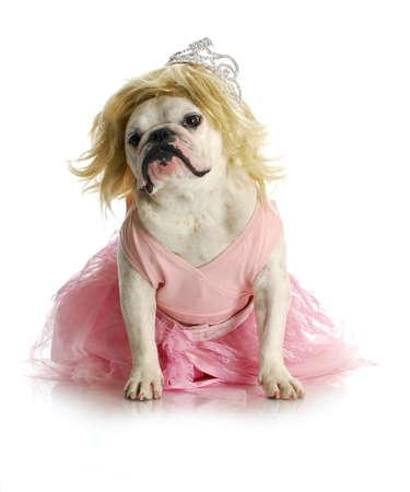 spoiled dog - english bulldog dressed up like a princess
