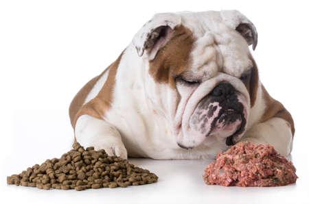 Photo pour dog choosing raw over kibble - bulldog - image libre de droit