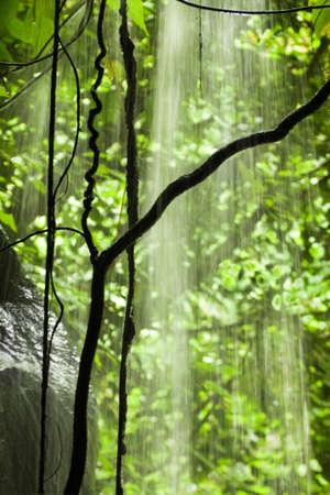 Jungle view with falling water, rocks and trees - vertical