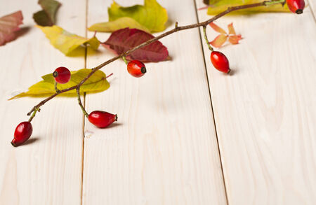 Dogrose on wooden background