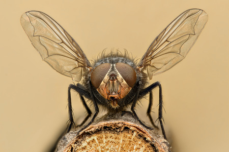 Photo for Extreme magnification - Fly liftoff - Royalty Free Image