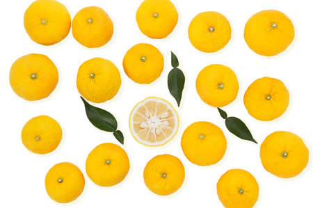 Photo for Citrus junos on white background - Royalty Free Image