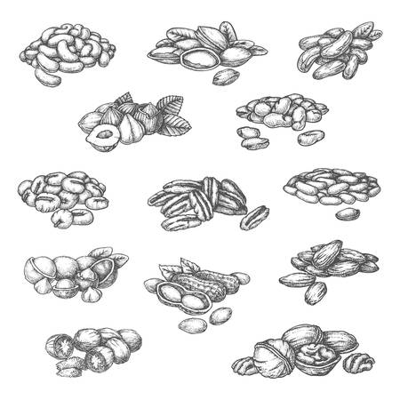 Illustration pour Nuts sketch isolated vector icons for food product package design. Hand drawn almond, hazelnut and pistachio, macadamia, pecan and Brazilian nut, peanut, soybean and pine seeds - image libre de droit