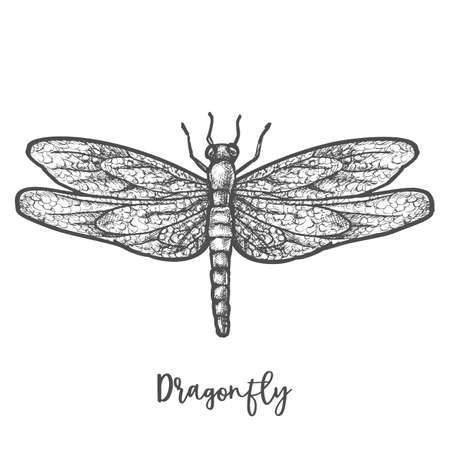 Illustration pour Engraved dragonfly or flying insect sketch vector - image libre de droit