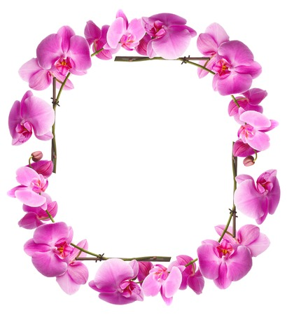 Framework from pink flowers on a white background