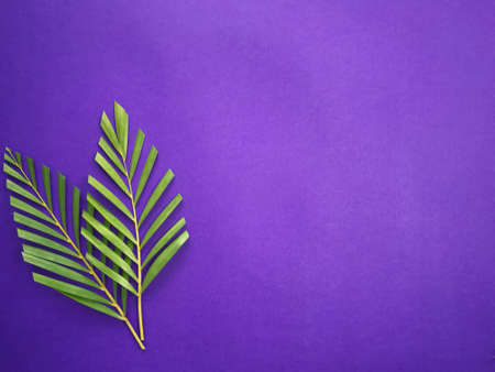 Photo for Good Friday, Palm Sunday, Ash Wednesday, Lent Season and Holy Week concept.  Palm leaves on purple background. - Royalty Free Image