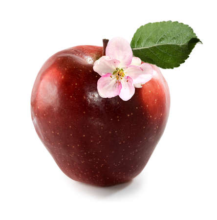 isolated image of red apple closeup
