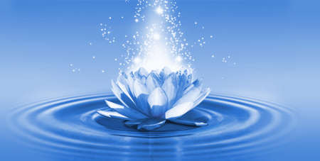 Photo for image of a lotus flower on the water closeup - Royalty Free Image