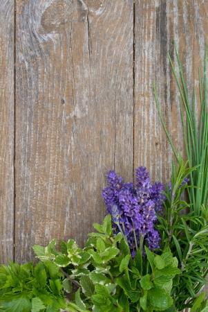 Lavender, rosemary, cut Lach, tarragon,  mint, celery, borage, lemon balm