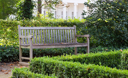 Wooden bench in the park with boxwood hedge