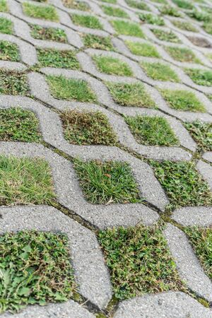 Paving stones with different grasses and wild herbs