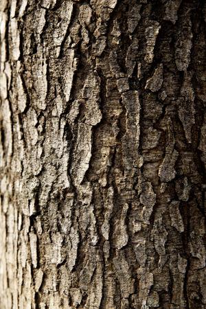 tree trunk closeup wallpaper