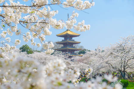 Foto de Early spring east lake cherry blossom at garden. - Imagen libre de derechos