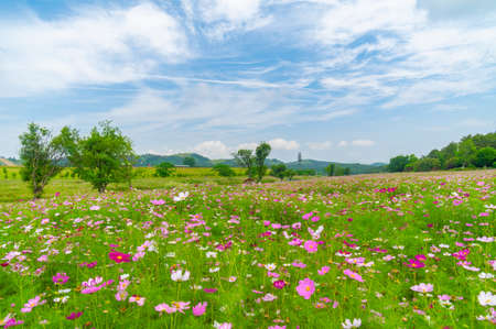 Photo pour Early summer scenery of Wuhan Mulan Grassland Scenic Area, Hubei - image libre de droit