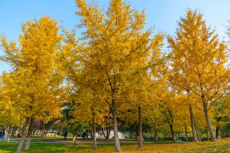 Photo pour Hubei Wuhan Liberation Park late autumn scenery - image libre de droit