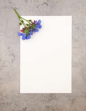 Photo pour Blue violet tender minimalist spring flower on neutral grey marble stone background and white paper with free blank copy space for text. Ready design template for card, invitations, wedding decor. - image libre de droit