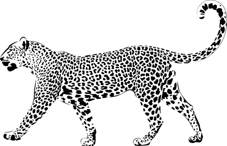Illustration pour Leopard in black interpretation - image libre de droit