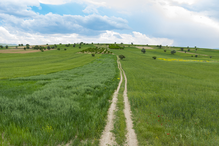 Long fine roads in agricultural land