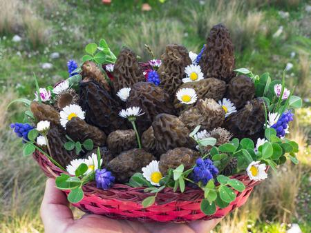 edible tasty and natural mushrooms