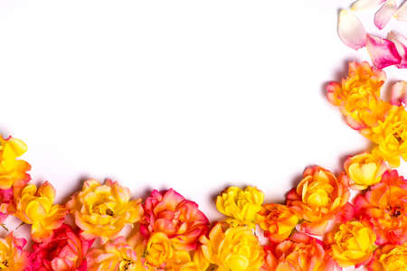 Photo for orange roses and empty space for your text - Royalty Free Image