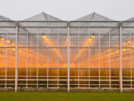 The exterior of a giant commercial glasshouse