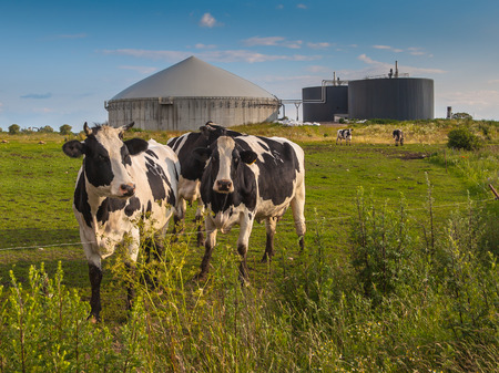 Bio Gas Installation on a farm processing Cow Dung