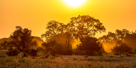 Foto de Orange morning light over savanna tree and bush in Kruger national park South Africa - Imagen libre de derechos