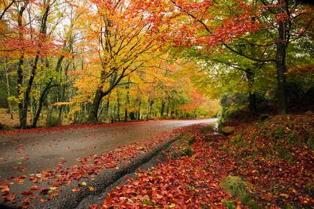 Road in autumn wood at Mata da Albergaria, Geres National Park, Portugal