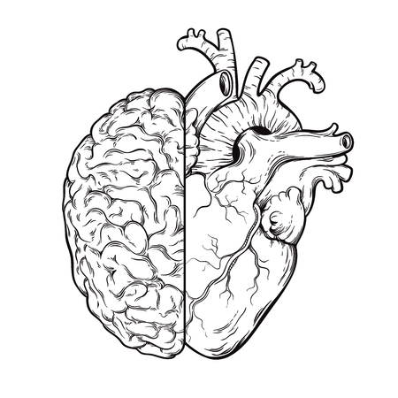 Ilustración de Hand drawn line art human brain and heart halfs - Logic and emotion priority concept. Print or tattoo design isolated on white background vector illustration - Imagen libre de derechos