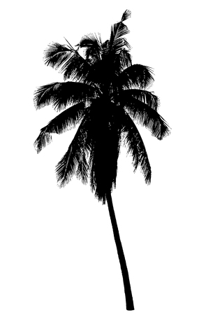 Coconut palm tree silhouette : Vector