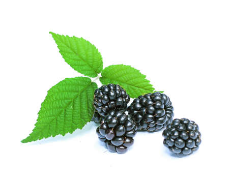 organic blackberries isolated on a white background
