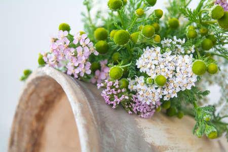 Photo pour Meadow medical herbs - Chamomile and Achillea closeup view. Alternative medicine herbal grass - image libre de droit