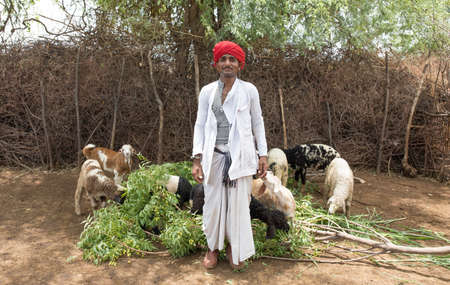 ANDOURE, RAJASTHAN INDIA - JUN 09, 2017:  rural man from Rebari commuinity wearing traditional turban and casual, this community know as Farmer And Herding Animalsのeditorial素材