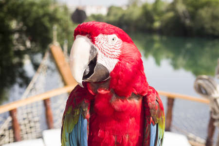 Red parrot on boat cruise