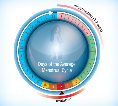 Circular flow chart with shiny centre with a female figure showing the average number of days days in a menstrual cycle and the period on menstruation and ovulation