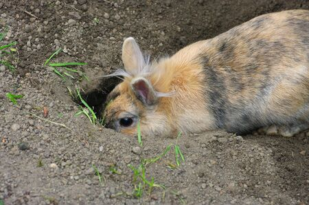 rabbit is digging a rabbit hole