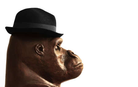 Concept photo of a sculpture of a gorilla head in profile wearing a businessman hat with lots of white copy space