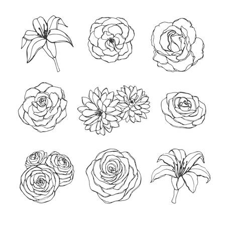 Illustration for Vector hand drawn set of rose, lily, peony and chrysanthemum flowers contours isolated on the white background. Vintage floral elements for your design. - Royalty Free Image