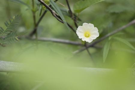 yellow flower Green background blur