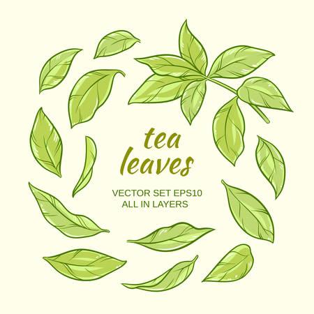 green tea leaves vector set