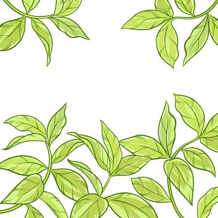 tea leaves vector frame on white background