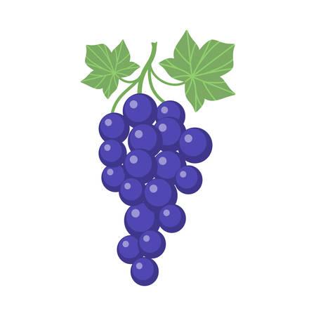 Illustration pour Grapes clipart cartoon with vine and leaves. Purple grapevine. - image libre de droit