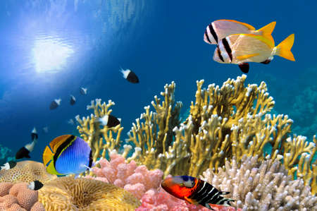 Underwater life of a hard-coral reef Red Sea Egypt.